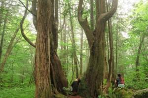 原生林の中で
